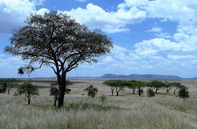La Tanzanie : de beaux paysages de natures